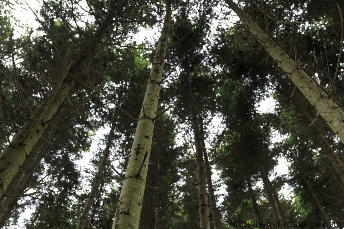 薪ストーブの灰(湯河原、熱海の木材)