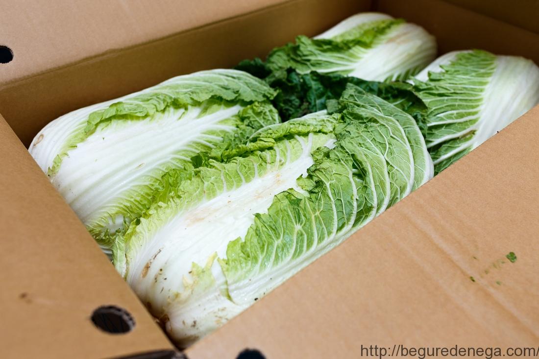 【濃縮】茨城県産 白菜【55kg】