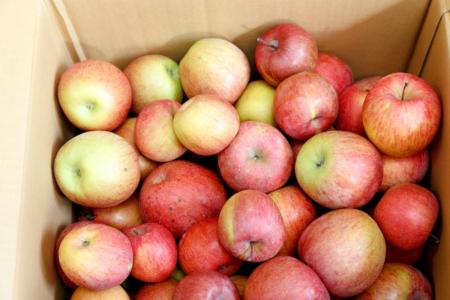 2018年11月購入 福島県福島市産 サンふじりんご